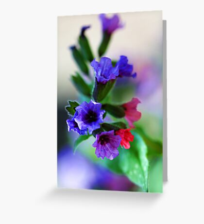 The Magnificent Mrs. Moon -- Pulmonaria Greeting Card