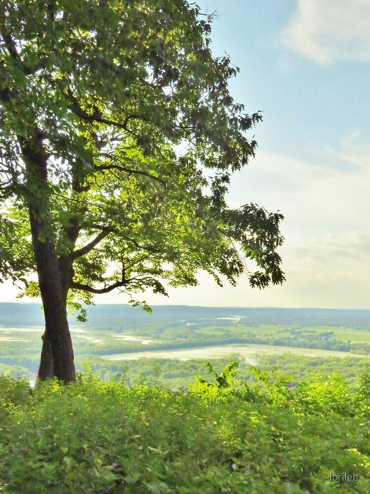 Tree on the Bluff by lorilee