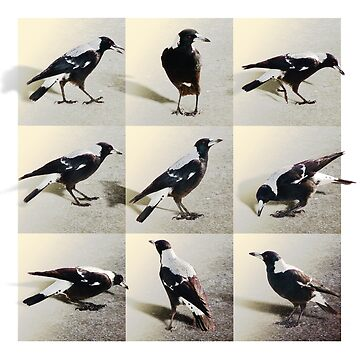9 Magpies by hartpix
