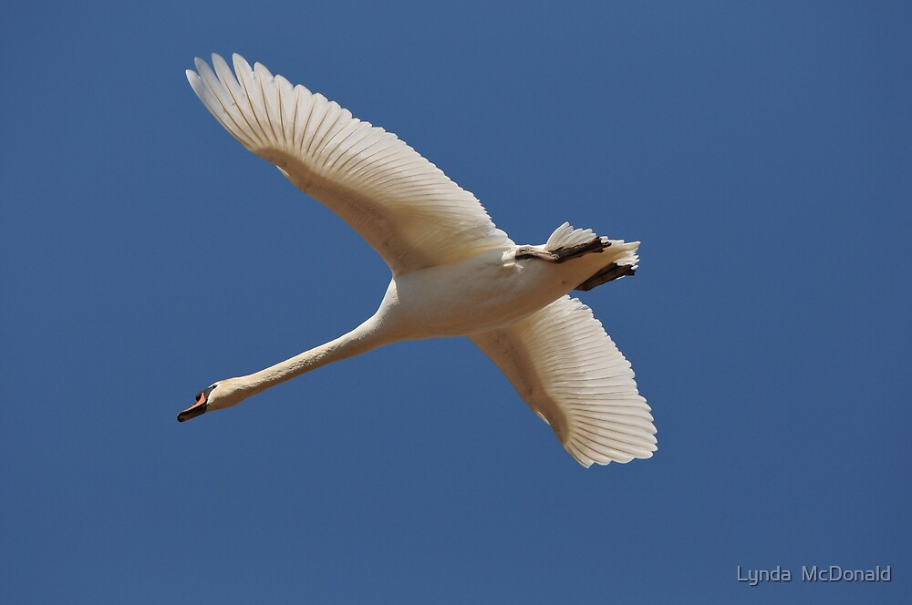 Beauty In Flight by Lynda   McDonald
