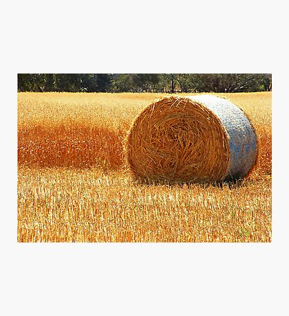 Hay Roll Photographic Print