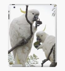 Sulfur-crested cockatoos - Snack time iPad Case/Skin