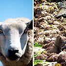 NZ Animals by Duncan Macfarlane