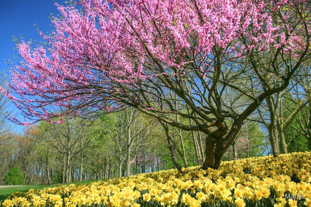 Colors of Spring by Marija