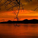 Sunkist Sunset by Gail Bridger