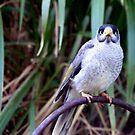 what kind of bird is he? by elizabethrose05