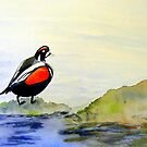 Harlequin Duck by Charisse Colbert