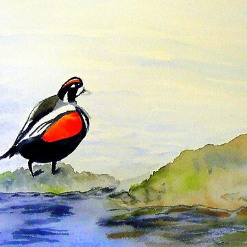 Harlequin Duck by charissecolbert