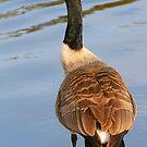 Duckie by Stephanie Hillson