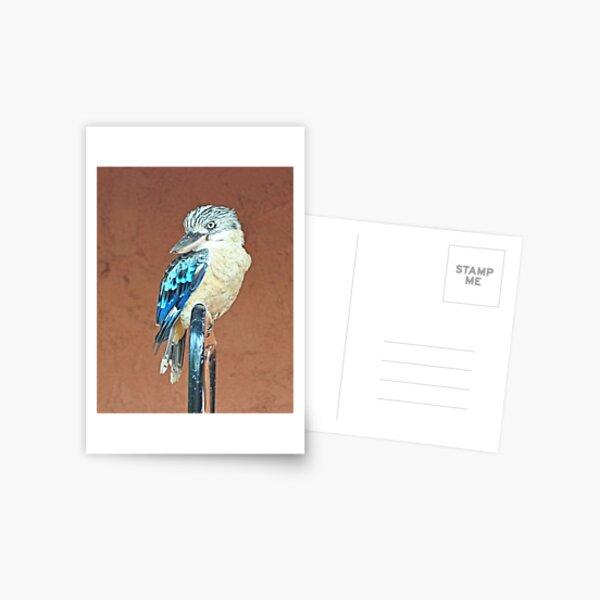 Kookaburra at Nitmiluk Postcard