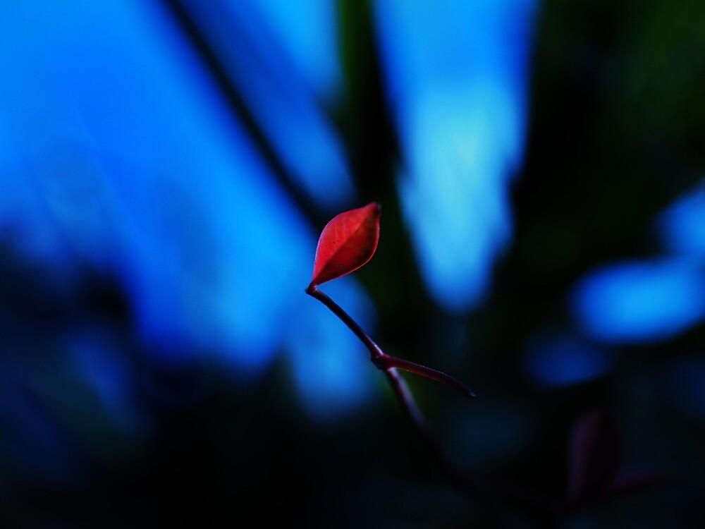 One Leaf by dvd2u