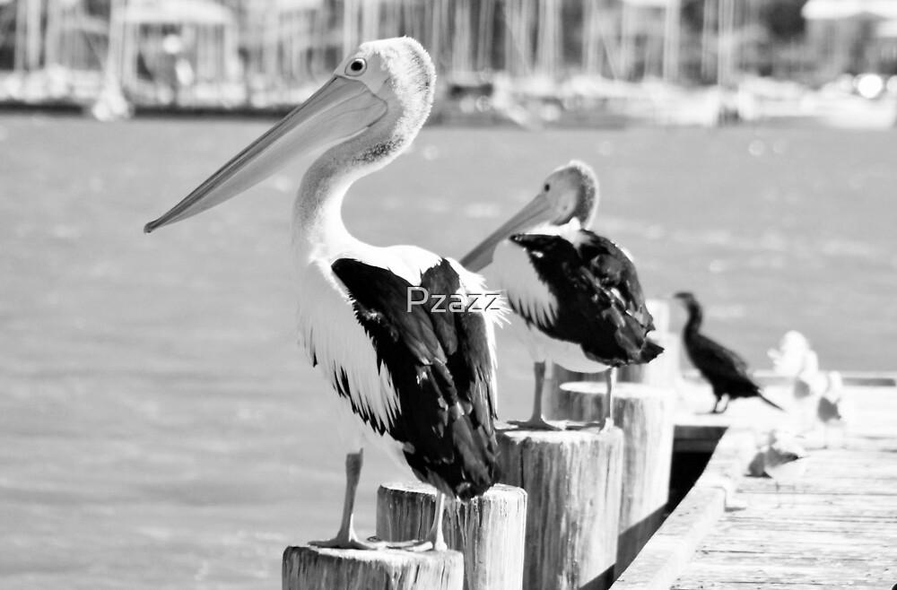 Pelicans at the Goolwa wharf, South Austrlia by Pzazz