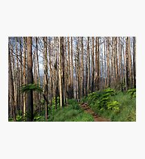 Among giants Photographic Print