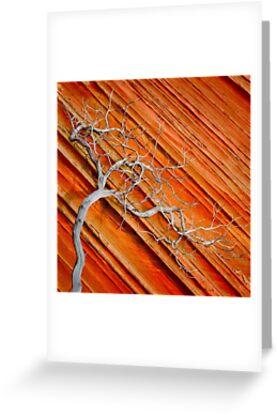 Wood & Stone by Inge Johnsson