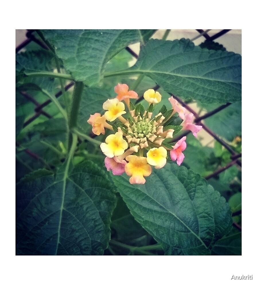 Tiny Beauty by Anukriti
