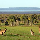The roos are in the top paddock! by Peter Doré