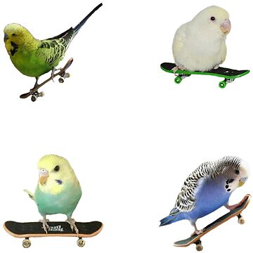 Skateboardin' Birds Sticker pack by Elisecv