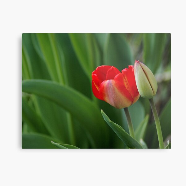 Open And Closed Metal Print