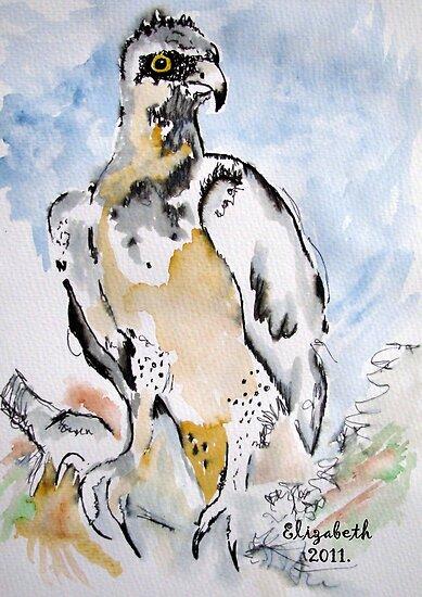 Raptor from Africa by Elizabeth Kendall