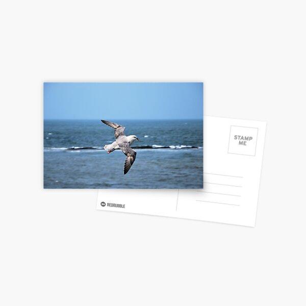 Fulmar in Flight (Fulmarus glacialis) Postcard