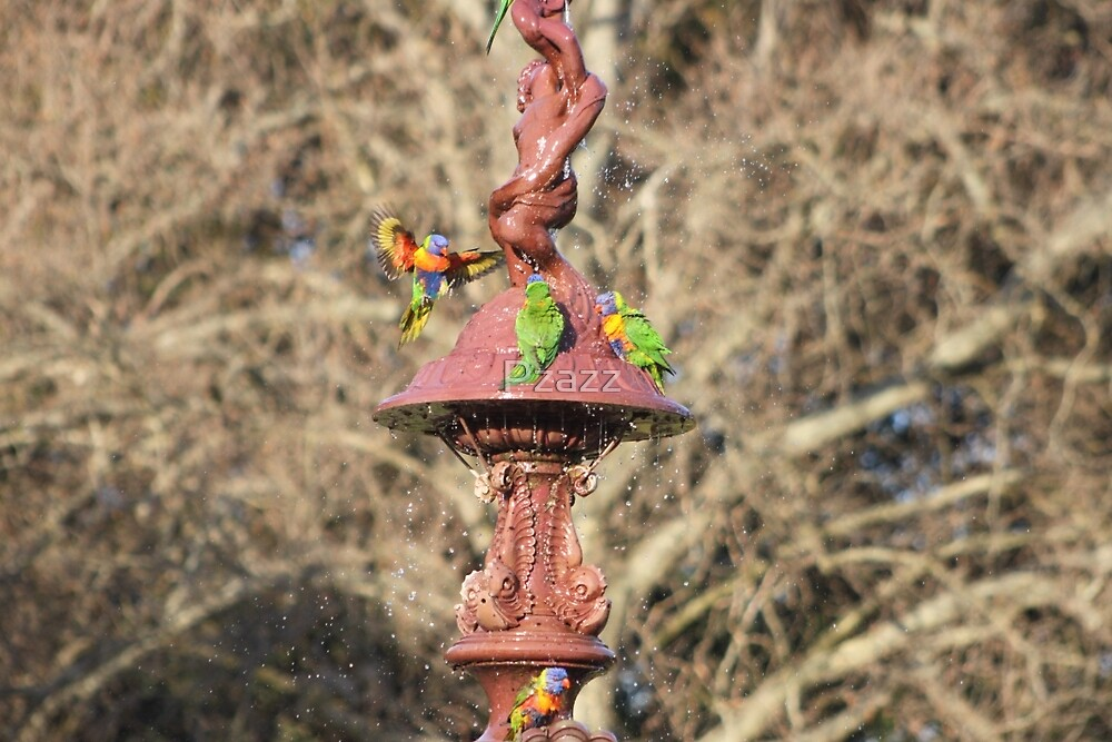 Stunning Lorikeets in fountain by Pzazz
