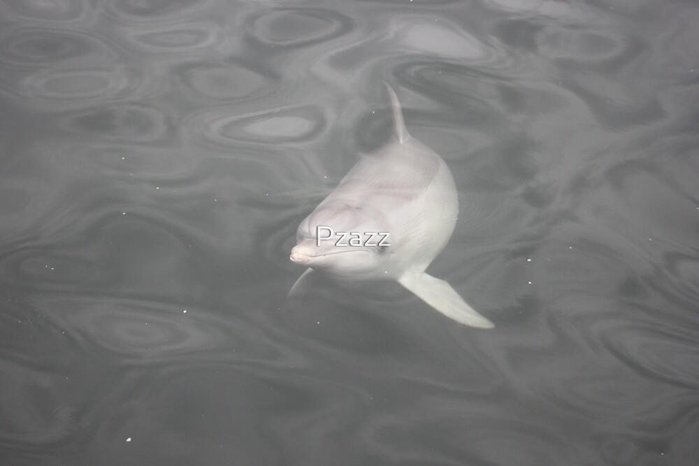 Gorgeous dolphin by Pzazz