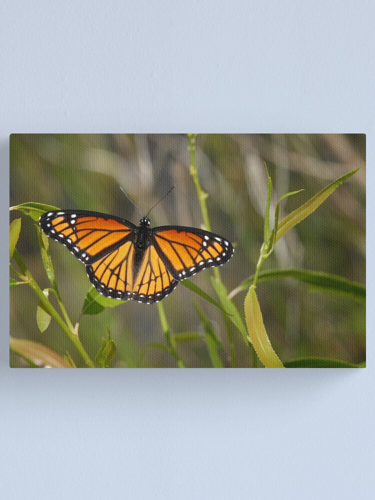 Alternate view of Viceroy Canvas Print