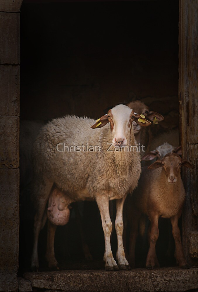 The look by Christian  Zammit
