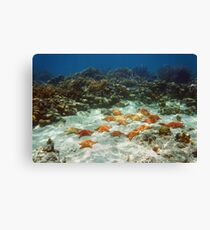 Many starfish underwater in a coral reef Canvas Print