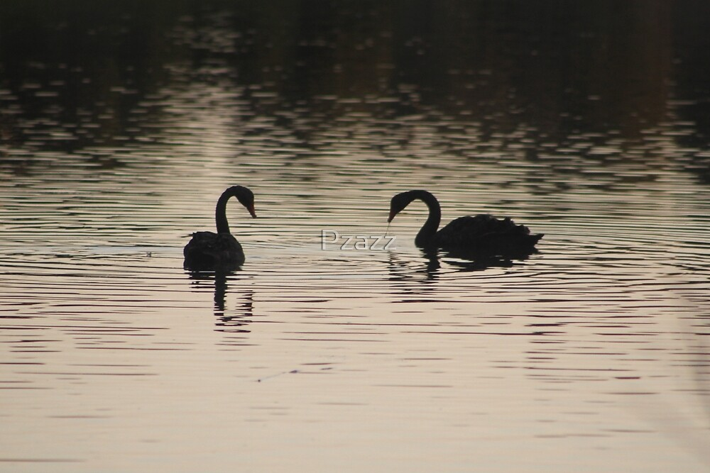 Swans silhouette. by Pzazz
