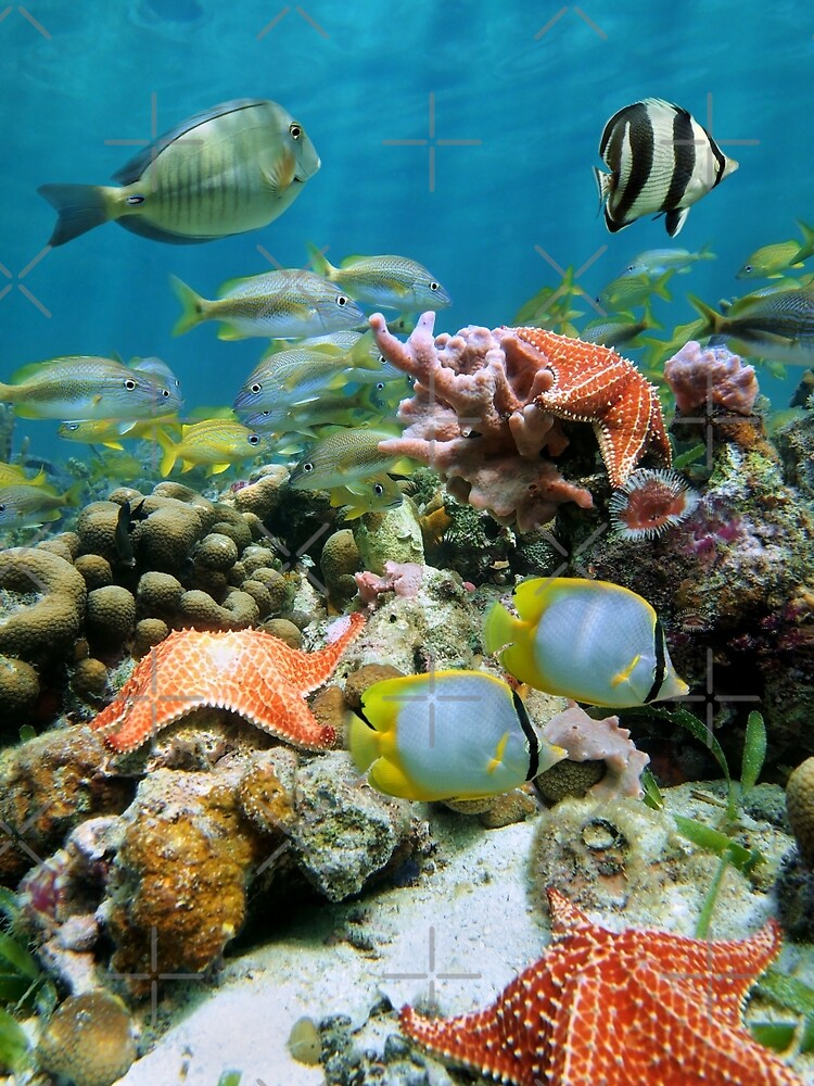 Underwater coral reef with starfish and colorful fish by Dam - www.seaphotoart.com