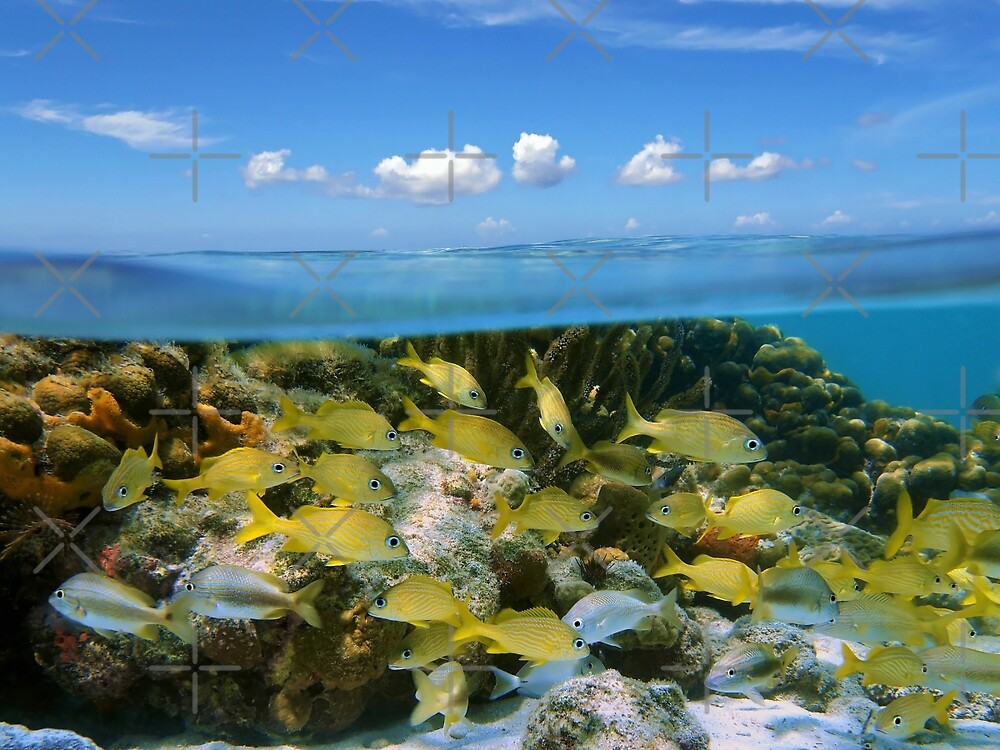Tropical fish in a coral reef and blue sky with clouds by Dam - www.seaphotoart.com