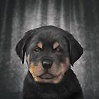 Drawing Puppy rottweiler  by bonidog