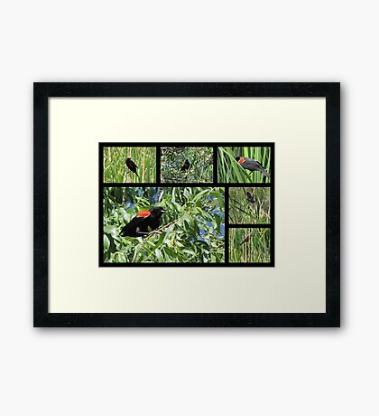 Red-winged Blackbird ~ Collage Framed Print
