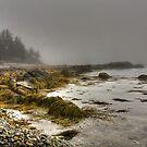 Morning Fog by Sue  Cullumber