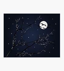 Night Birds and Full Moon Photographic Print
