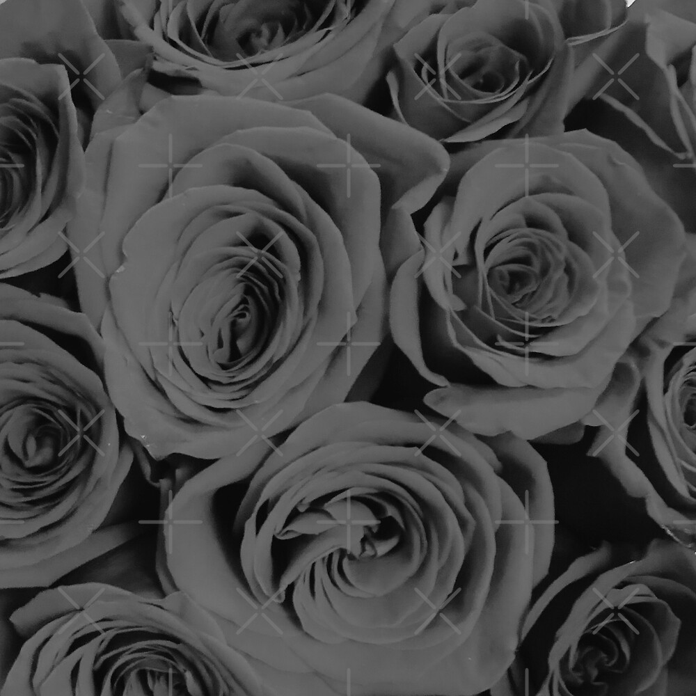 Romantische Schwarzweiss-Rosen von AlexandraStr