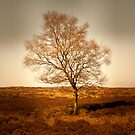 Golden Tree, Peak District by Steven Cliff