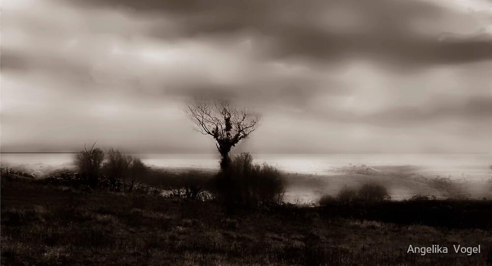 Transience by Angelika  Vogel