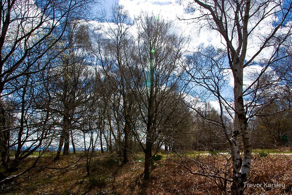 Trees #1 by Trevor Kersley