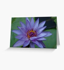 Lovely Lady Lily Greeting Card