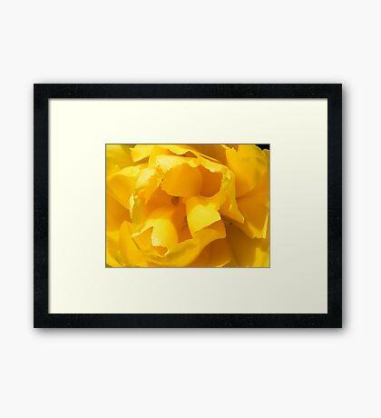 Pretty Petals Framed Print
