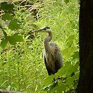 Heron by Heather Crough