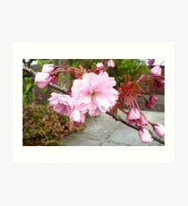 Ornamental Cherry Blossom 2 Art Print