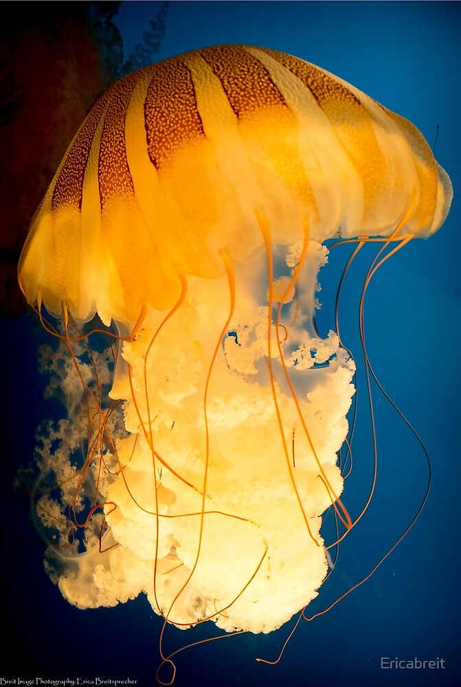 The Big Yellow Jelly by Ericabreit
