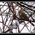 WINTER BIRD by BOLLA67
