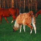 Grazing at the Golden Hour by Susan Blevins