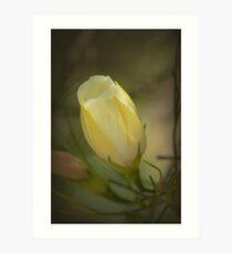 Yellow Flower Bud Art Print