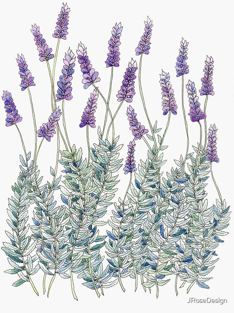 Lavender, Illustration by JRoseDesign