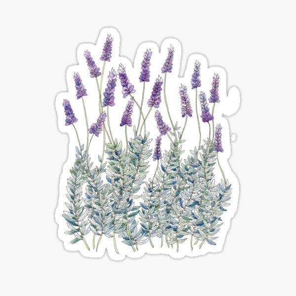 Lavender, Illustration Sticker